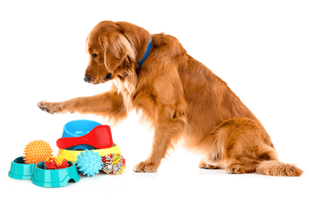Group Dog Obedience Training Classes - Puppy Training Biting